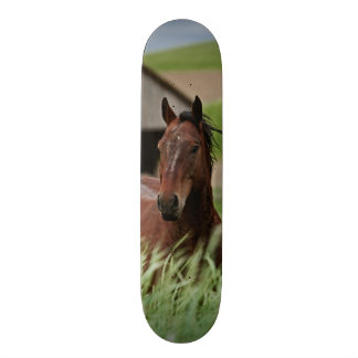Viewing horses in a field in the Palouse Skateboard