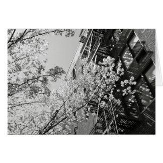 Village Cherry Blossoms Card