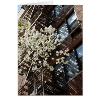 Village Cherry Blossoms Too Card