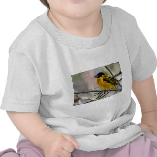 Village Weaver on branch Tees