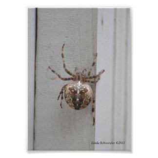 ville du l'Arachnide-Concepteur 5X7 ! Photo D'art