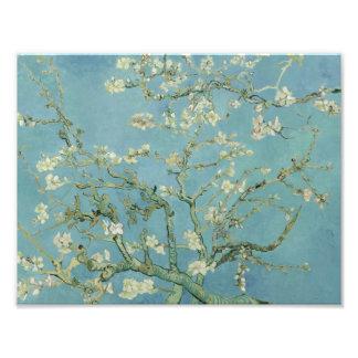 Vincent van Gogh - Almond Blossom Photo
