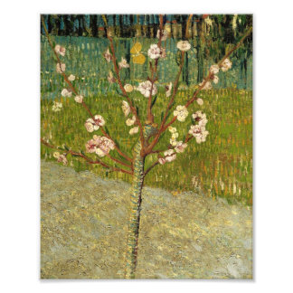 Vincent Van Gogh Almond Tree In Blossom Vintage Photo Print