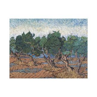 Vincent van Gogh Olive Grove Canvas Print