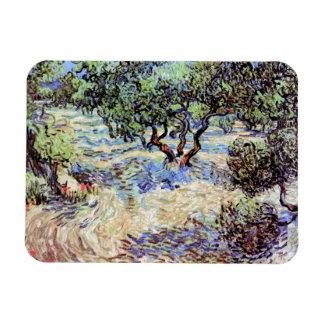Vincent Van Gogh - Olive Orchard Fine Art Magnet
