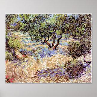 Vincent Van Gogh - Olive Orchard Fine Art Poster