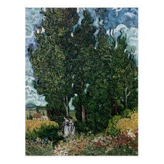 Vincent van Gogh | The cypresses, c.1889-90 Postcard