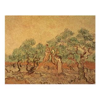Vincent van Gogh | The Olive Grove, 1889 Postcard