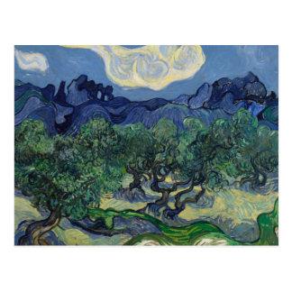 Vincent van Gogh - The Olive Trees Postcard
