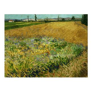 Vincent van Gogh - Wheatfield Postcard