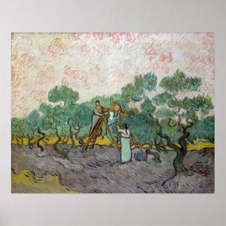 Vincent van Gogh Women Picking Olives Poster