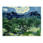 Vincent van Gogh's Olive Trees (1889) Postcard