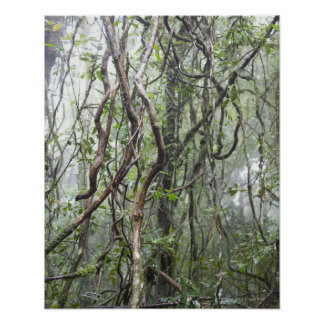 vine and branches twisted in rainforest poster