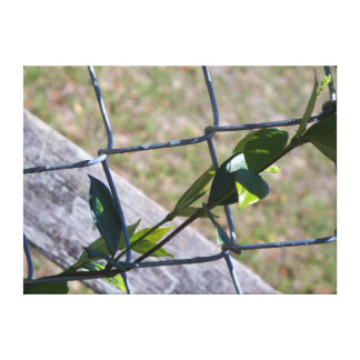vine on a chain link fence - life finds a way canvas print
