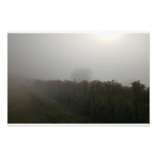 Vines in the fog photo print