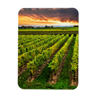 Vineyard at sunset rectangle magnets