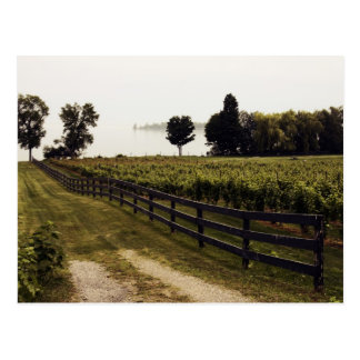Vineyard at the lake with fence landscape postcard