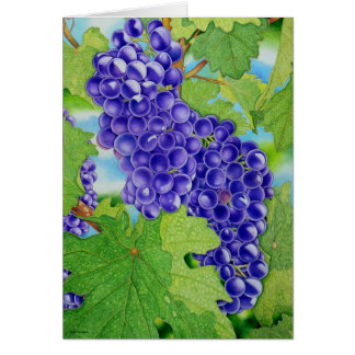 Vineyard Card