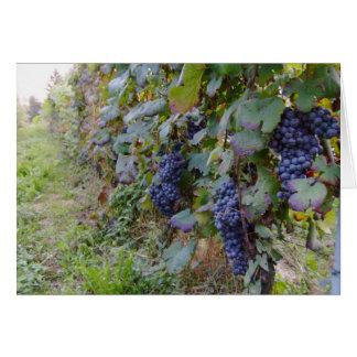 Vineyard Card