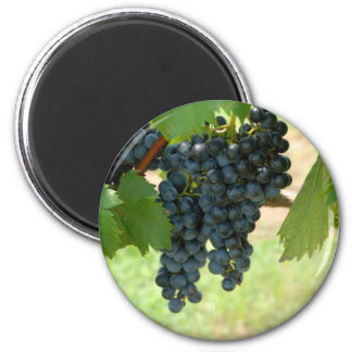 vineyard grapes refrigerator magnet