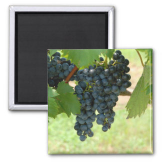 vineyard grapes square magnet