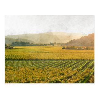 Vineyard in Autumn in Napa Valley California Postcard