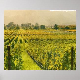 Vineyard in Autumn in Napa Valley California Poster
