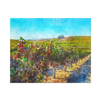 Vineyard in Napa Valley California Canvas Print