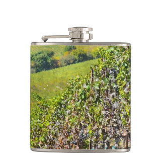 Vineyard in Napa Valley California Hip Flask