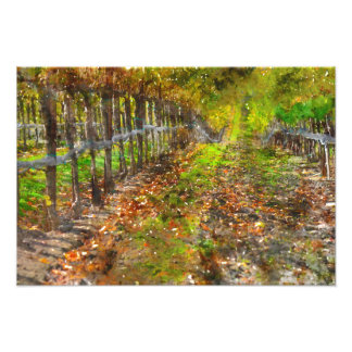Vineyard in Napa Valley California Photographic Print