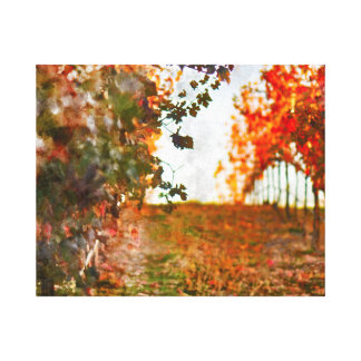 Vineyard in Napa Valley during Fall Canvas Print