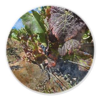 Vineyard in Napa Valley during Fall Ceramic Knob