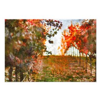 Vineyard in Napa Valley during Fall Photo