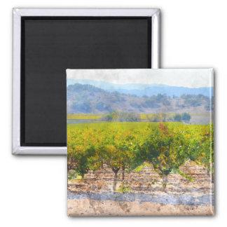 Vineyard in Napa Valley Magnet