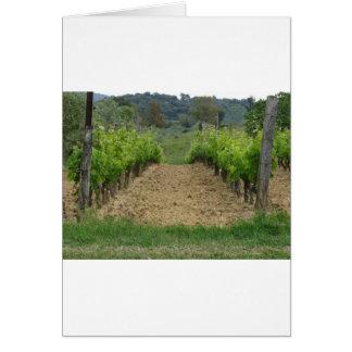 Vineyard in spring . Tuscany, Italy Card