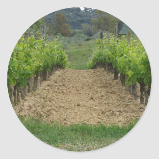 Vineyard in spring . Tuscany, Italy Classic Round Sticker