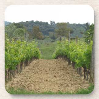 Vineyard in spring . Tuscany, Italy Coaster