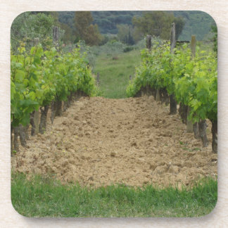 Vineyard in spring . Tuscany, Italy Coaster