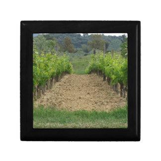 Vineyard in spring . Tuscany, Italy Gift Box