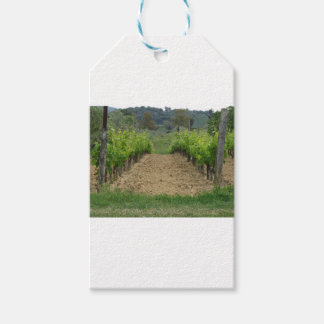 Vineyard in spring . Tuscany, Italy Gift Tags