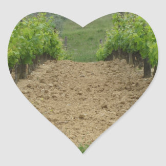 Vineyard in spring . Tuscany, Italy Heart Sticker