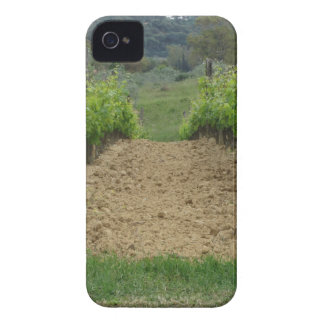 Vineyard in spring . Tuscany, Italy iPhone 4 Cover