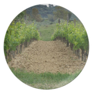 Vineyard in spring . Tuscany, Italy Party Plates