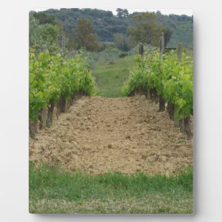 Vineyard in spring . Tuscany, Italy Plaque