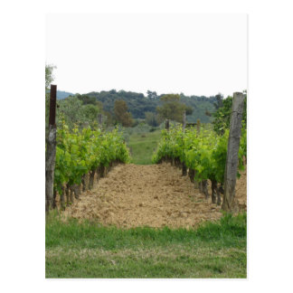 Vineyard in spring . Tuscany, Italy Postcard