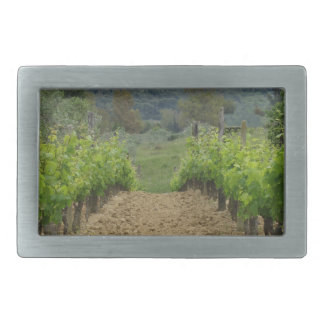 Vineyard in spring . Tuscany, Italy Rectangular Belt Buckle
