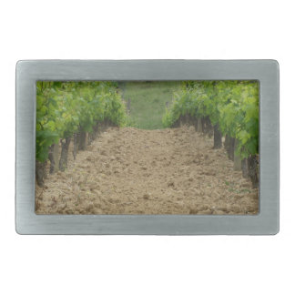 Vineyard in spring . Tuscany, Italy Rectangular Belt Buckles