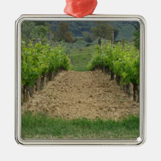 Vineyard in spring . Tuscany, Italy Silver-Colored Square Ornament