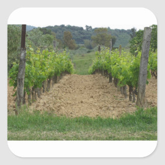 Vineyard in spring . Tuscany, Italy Square Sticker