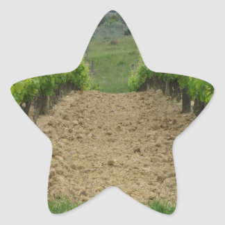 Vineyard in spring . Tuscany, Italy Star Sticker